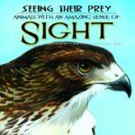 どうやって食べ物を探す?目の良い動物シリーズ!「Seeing Their Prey: Animals With an Amazing Sense of Sight」★動画有