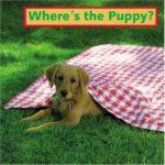 子犬はどこだ?「Where's the Puppy?」